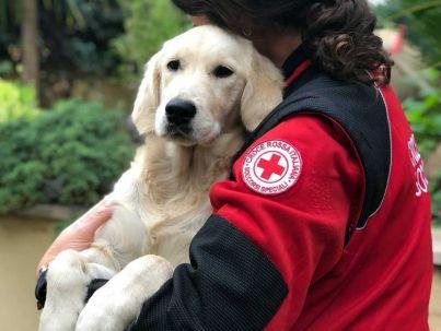 Amici a 4 zampe - Croce Rossa Italiana